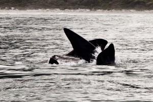 Hermanus whale watching trips