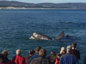 Whale watching sighting South Africa