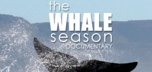 USB WHALE SEASON MOVIE