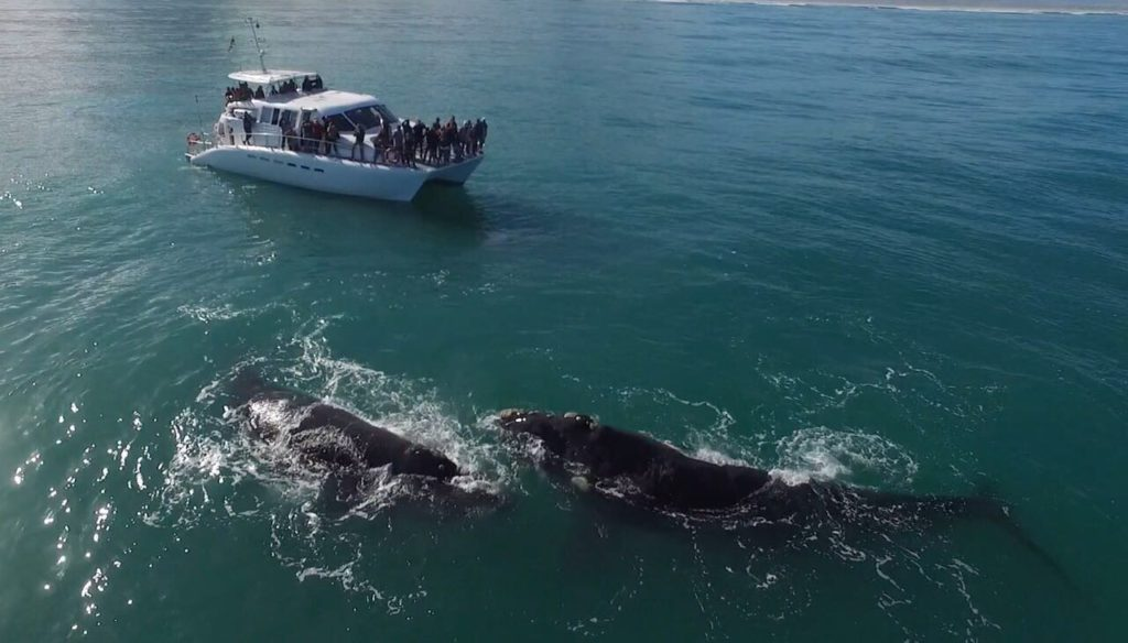 whale season 2017