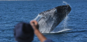Hermanus Whale Watching -Southern Right Charters