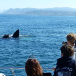August Whale Watching 2018