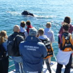 Whale Watching August 2018