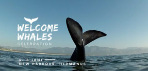 welcome whales